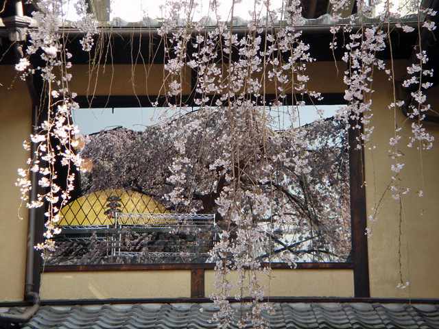 20070328sakura2